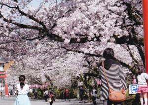 春/伊山正孝