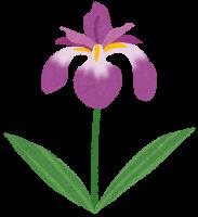 flower_syoubu