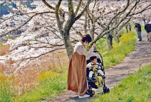 桜花に抱かれて/日吉良子