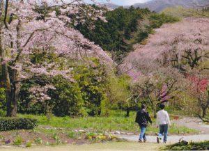春の訪れ/旭寿一
