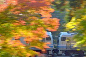 紅葉列車/中野俊之